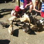 Feeding the animals at Bosinver