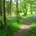 Woodland at Bosinver