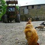 Farmyard at Bosinver
