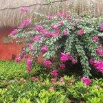 Flores del Jardi