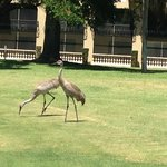 Cranes on the grounds