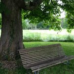 My picnic bench in the rain