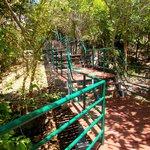 zoo tree top walkway around the elephant pen