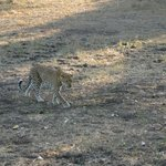Croc Valley game drive - expert guides
