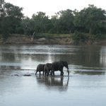 View from room - elephants crossing the river