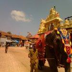 Rathostawam of udupi krishna temple -Muralitharan