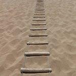 砂丘を登るための梯子