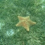 Étoile de mer en plongée