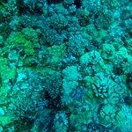 Molakini Reef