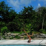 Pincha Mayurasana Variation near Pool