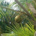 coconut right outside room balcony