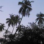 coconut trees dancing