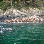 Just a few of those Sea Lions!