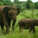 Photo de Mahoora Tented Safari Camp Wasgamuwa