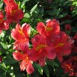 La Rotisserie ・・・外の花