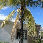 Kokosnotenboom vlak naast de voordeur.