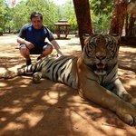 Big tigers!