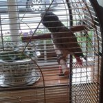 1 of the 2 parrots