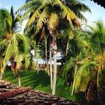 palms harvesting