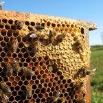 beehives on moors