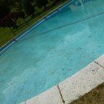 Der ungepflegte Pool