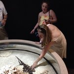 Touching a bamboo shark