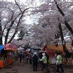 桜祭りで屋台も出てました