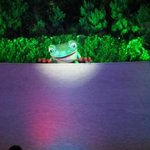 Frog Show
