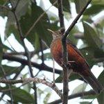 Pássaro nas árvores da pousada