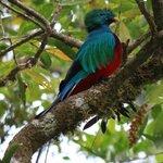 Quetzal !!! :-)