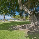 Shade tree, beach in background