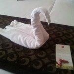 un cisne de bienvenida :)