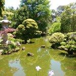 Japanese tea gardens, Golden Gate Park