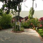 prachtige en kleurijke tuin