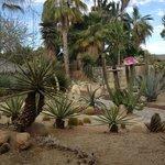 And more cactus garden