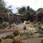 Even more cactus garden