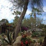 More Cactus Garden