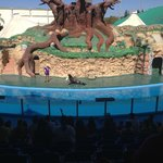 Seal and sea lion show