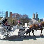 Carriage Tour - Central Park