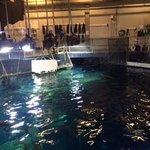 Great Ocean Tank Behind the Scenes Tour