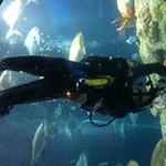 Great Ocean Tank Diver