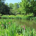 Beautiful bog garden