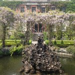 The fountain and glorious wisteria