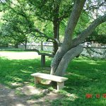 tree with bench