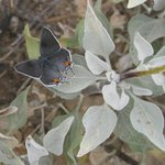 Butterfly along the Garwood Loop trail.