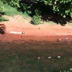 The ducks we saw all three days...