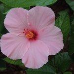 flower outside