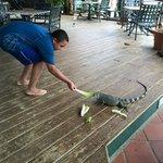 Feeding the iguana