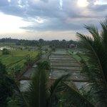 Vu sur rizière