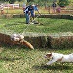 Circular Dog Derby